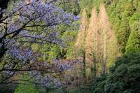 岩屋川内の春(2) - きずなの家創り