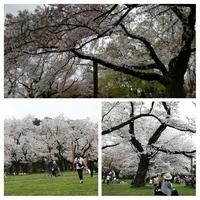 小金井公園 - 下手の横好き