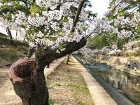 老木に咲く花が年々増えている。命のバトンタッチが進む。 - ライブ インテリジェンス アカデミー(LIA)