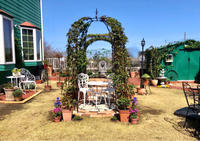 お迎え苗の植え付け♡と、ベニカXガード粒剤を撒きました♫ - 薪割りマコのバラの庭