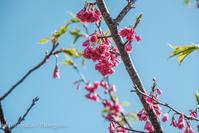 21散歩〜春花盛り - 散歩と写真 Fotografia é Passeggiata