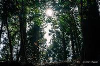 ミツマタの森 - toshi の ならはまほろば