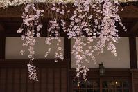 秩父宮記念公園にしだれ桜 - エーデルワイスブログ
