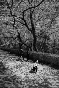 朝の散歩20210331 - Yoshi-A の写真の楽しみ