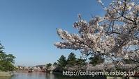 桜、満開です - 40代からの身の回り整理塾~自分カルテ®をつくろう