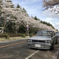 2021 桜 - ハコスカ写真館