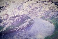 hanano miti - IL EST TROP TARD 時は過ぎゆく ... 2