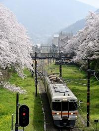 桜見物 - 湘南☆浪漫