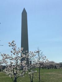 2021 ワシントンD.C. 桜便り - E*N*JOY