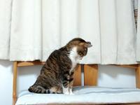 寝返り&乙女色 - 黒猫屋のにくきゅう