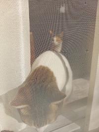 結構好きです - hanasdiary.exblog.jp
