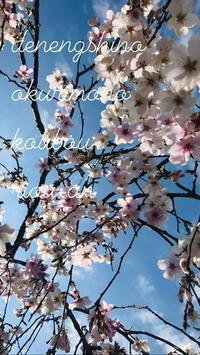 初夏のような春 - *田園菓子のおくりもの工房…  里桜庵Riou-an