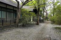 ご近所の桜など追いかけて 2021年3月30日 - 暗 箱 夜 話 【弐 號】