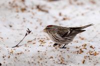 上も下も賑やか - 北の大地で野鳥ときどきフライフィッシング