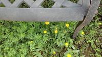 草取り - ウィズコロナのうちの庭の備忘録~Green's Garden~