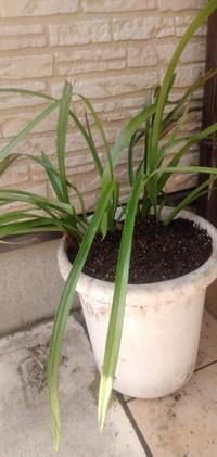 苗の頂き物①2021 - つれづれなるままに・・・ふくろうみーの庭