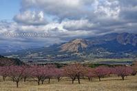 アスペクタの河津桜-青空のある風景 - Mark.M.Watanabeの熊本撮影紀行