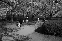 櫻の日はスナップを20210331 - Yoshi-A の写真の楽しみ