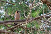 色々な鳥さんとの出会い - ジャコの「毎日 好きな事♪やってます」
