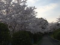 ヨガ呼吸法ですっきり - 花の自由旋律