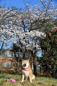 花盛り - 写心食堂