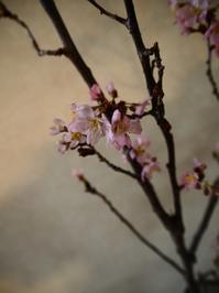 桜の季節のおもてなし - Kitchen diary