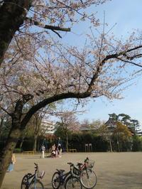 桜並木の散策コース・東京(竹の塚)~埼玉草加市(谷塚)界隈 - 活花生活(2)