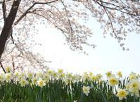 4月 の マンボ♪ - monn-sann