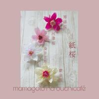 mamaごとな紙桜の品種も・・・彩り、いろいろ♪ - Oh!MaMagoto  ***MaMan*s idée***