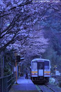 春の夜明 - PTT+.