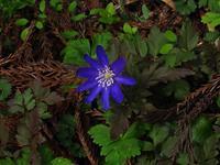 春の花々 - 飛騨山脈の自然