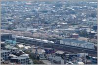 桜新幹線-2 - 野鳥の素顔 <野鳥と日々の出来事>
