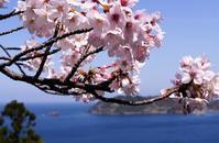 島根町チェリ-ロードにて - じじ & ばば の Photo blog