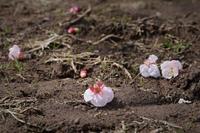 花の落下は鳥たちの仕業 - フォトな日々