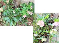 庭の花.。*゚・*:.。.:+とおうちごはん - おだやかなとき