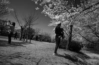 櫻の日はスナップを#0320210331 - Yoshi-A の写真の楽しみ