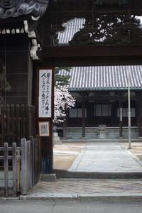 桜高砂十輪寺 - YAJIS OFFICE BLOG