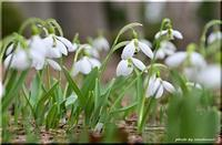 春の豊平公園 - 北海道photo一撮り旅