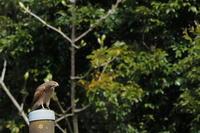 印旛沼北部調整池近辺 2020.4.2 - 鳥撮り遊び