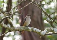 OLYMPUS EM1 MarkⅢ で - 写真で綴る野鳥ごよみ
