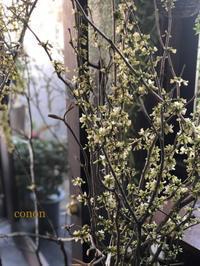 今日は枝物からご紹介です。 - 暮らしに花を 〜    木 音 conon