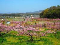 桃源郷をお写んぽ - つれづれ日記Ⅱ
