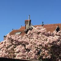 【英語教室】4月開講のクラス最新版 - ベルギーの小さなおみせ PERIPICCOLI