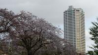桜ジェット終わりました【 20214/1(木)  】 - 夜つぐみの鳴くところで