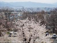 長野市では急速に桜が開きます - オンライン長野写真展
