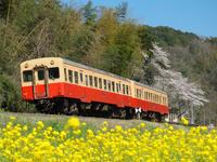 2015 4 2 小湊鉄道 キハ200 28A - kudocf4rの鉄道写真とカメラの部屋2nd
