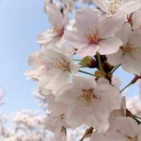 春爛漫 - ホリスティックセラピー Rosewood ∞ space