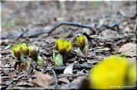 春の豊平公園 2 - 北海道photo一撮り旅