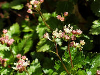 立久恵峡散策② - 清治の花便り