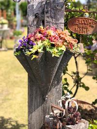 〝チューリップ〟ブルーダイヤモンド♡と、バタフライ咲ワルツ♫ - 薪割りマコのバラの庭